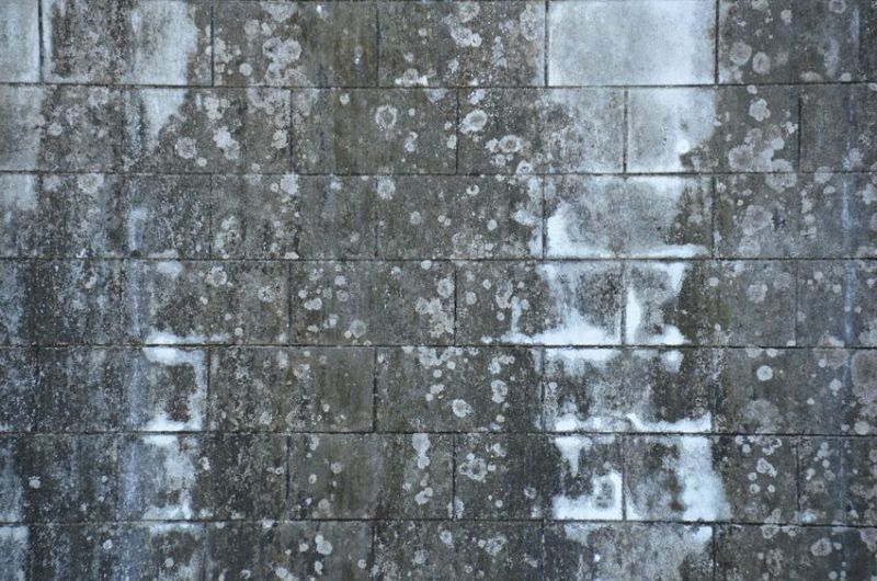 18819765 - concrete wall with black mold